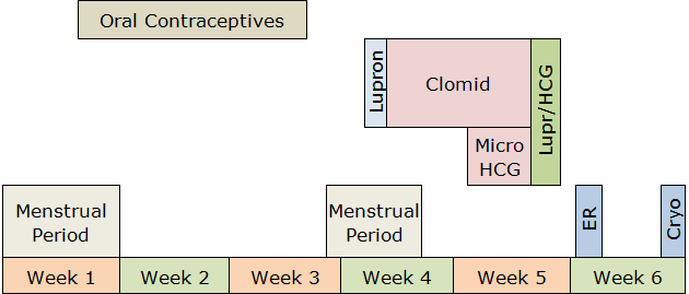 Soft-IVF Procedure Timeline